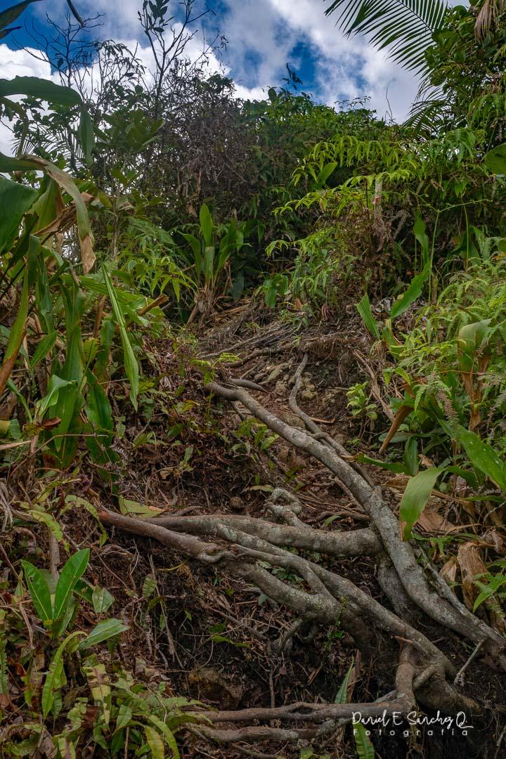 Vegetación cerro Trinidad